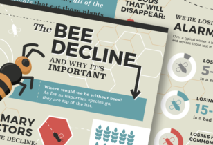 bee infographic design nyc