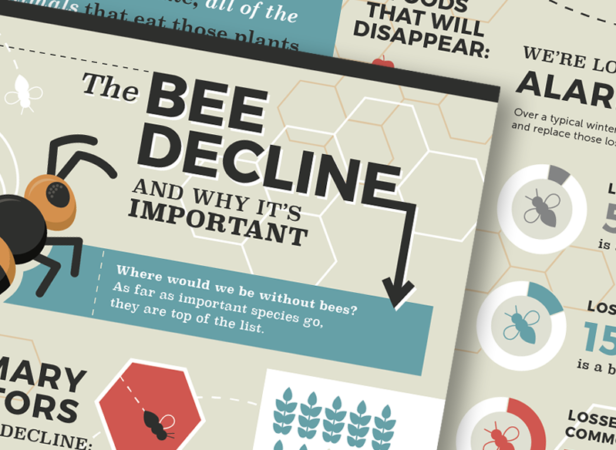 bee infographic design nyc