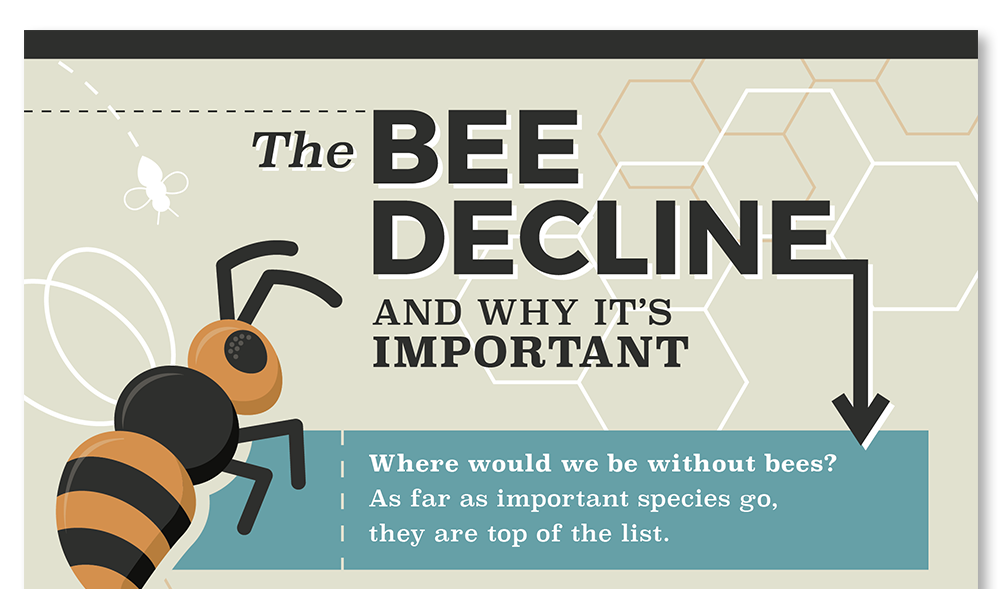 bee decline infographic design nyc